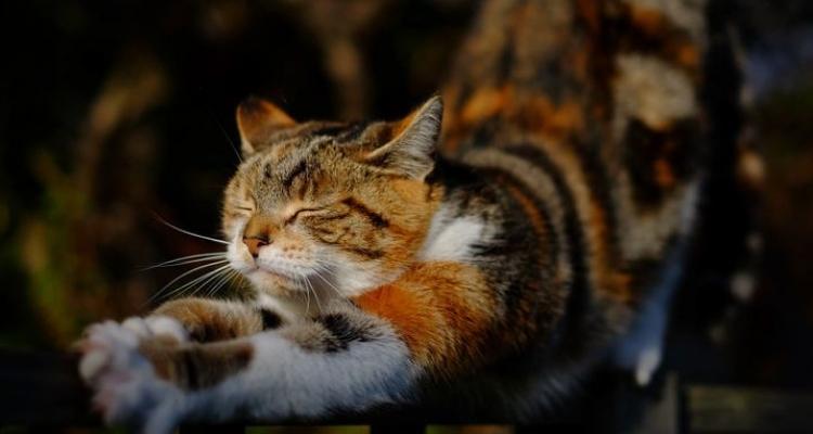 L'attribut alt de cette image est vide, son nom de fichier est vie-des-chats-1.jpg.