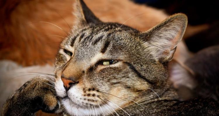 L'attribut alt de cette image est vide, son nom de fichier est vie-des-chats-13.jpg.