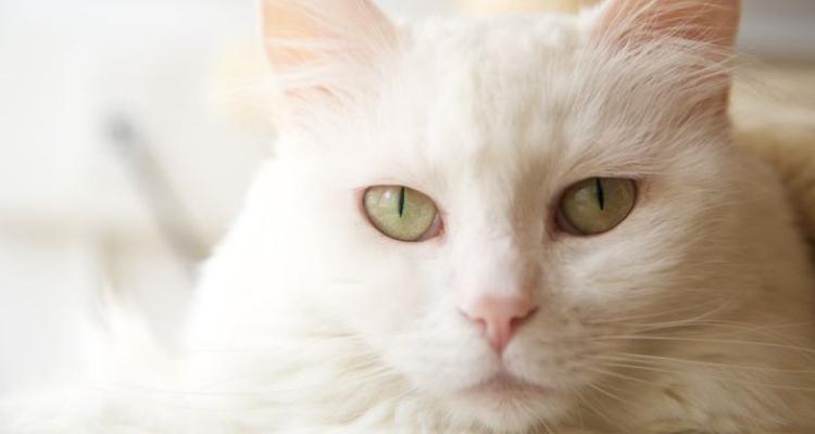 L'attribut alt de cette image est vide, son nom de fichier est vie-des-chats-15.jpg.
