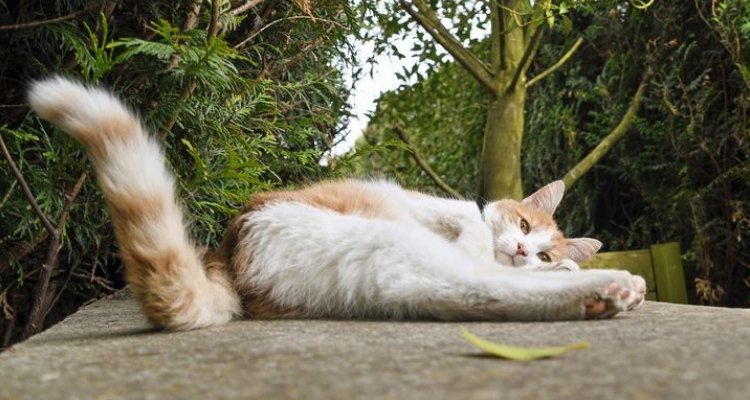 L'attribut alt de cette image est vide, son nom de fichier est vie-des-chats-19.jpg.