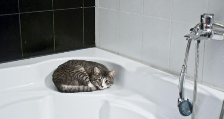 L'attribut alt de cette image est vide, son nom de fichier est vie-des-chats-20.jpg.