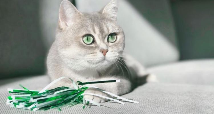L'attribut alt de cette image est vide, son nom de fichier est vie-des-chats-27.jpg.