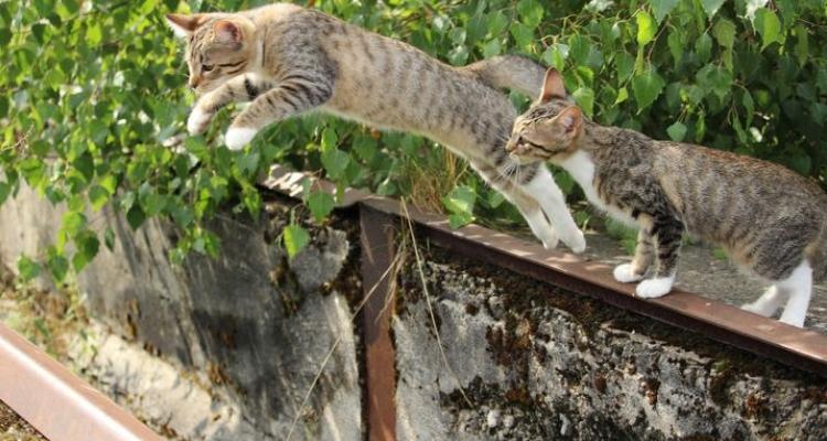 L'attribut alt de cette image est vide, son nom de fichier est vie-des-chats-28.jpg.