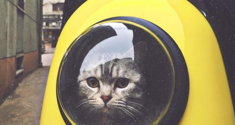 L'attribut alt de cette image est vide, son nom de fichier est vie-des-chats-29.jpg.