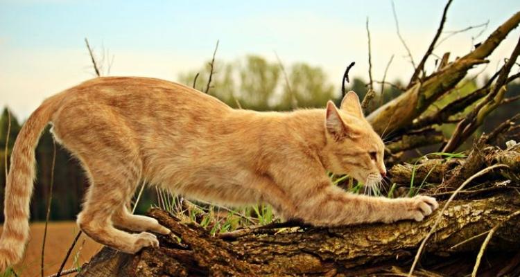 L'attribut alt de cette image est vide, son nom de fichier est vie-des-chats-3.jpg.
