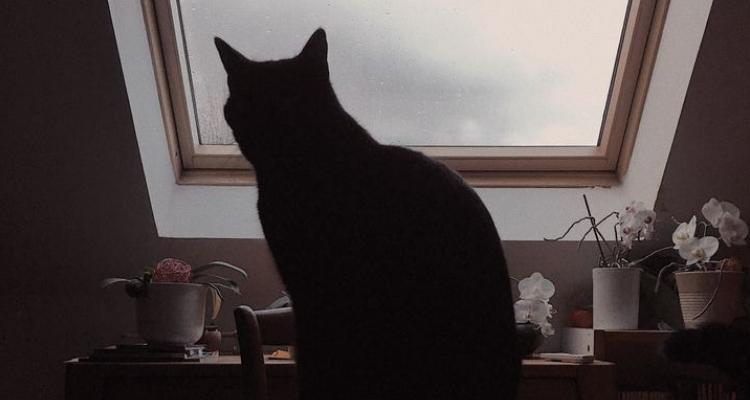 L'attribut alt de cette image est vide, son nom de fichier est vie-des-chats-32.jpg.