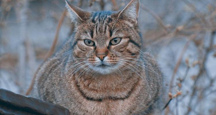 L'attribut alt de cette image est vide, son nom de fichier est vie-des-chats-33.jpg.