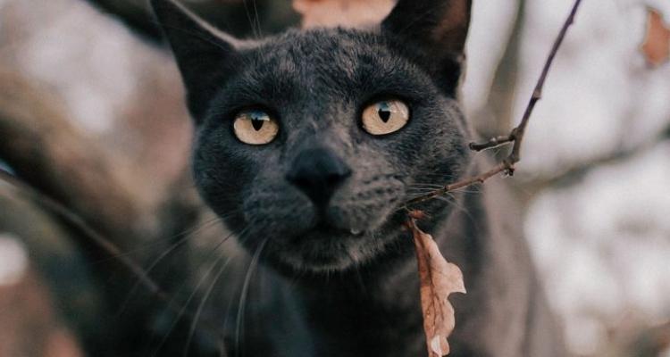 L'attribut alt de cette image est vide, son nom de fichier est vie-des-chats-34.jpg.