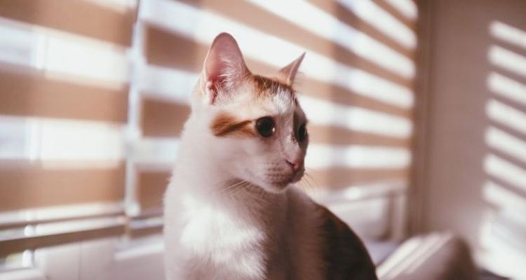 L'attribut alt de cette image est vide, son nom de fichier est vie-des-chats-36.jpg.