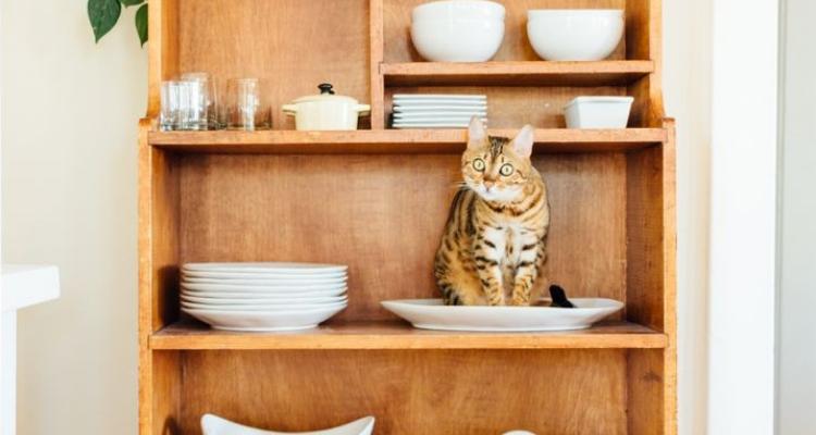 L'attribut alt de cette image est vide, son nom de fichier est vie-des-chats-38.jpg.