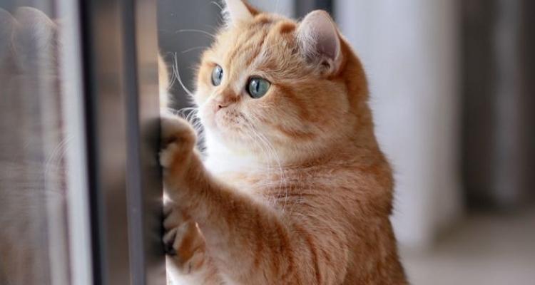 L'attribut alt de cette image est vide, son nom de fichier est vie-des-chats-5.jpg.