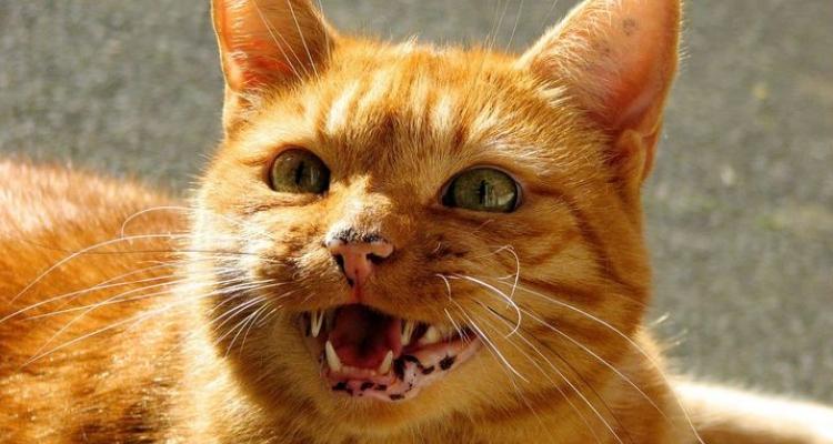 L'attribut alt de cette image est vide, son nom de fichier est vie-des-chats-6.jpg.