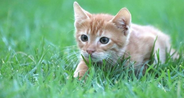 L'attribut alt de cette image est vide, son nom de fichier est vie-des-chats-8.jpg.